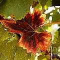 First Signs Of Autumn by Dry Leaf