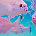 Fish Frenzy by Carey Chen