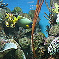 Fish - National Aquarium In Baltimore Md - 121232 by DC Photographer
