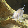 Fish - National Aquarium In Baltimore Md - 121248 by DC Photographer