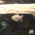 Fish - National Aquarium In Baltimore Md - 121249 by DC Photographer
