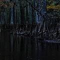Fisheating Creek 28 by Carol Kay