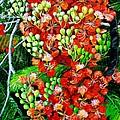 Flamboyant In Bloom by Karin  Dawn Kelshall- Best