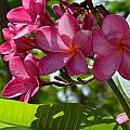 Flora Key West by Monika Maksimowicz