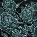 Floral Constellations by Wendy J St Christopher