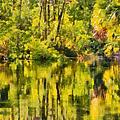 Florida Jungle by Christine Till