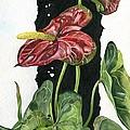 Flower Anthurium 01 Elena Yakubovich by Elena Yakubovich