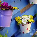 Flower Baskets by Carlos Caetano