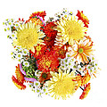 Flower bouquet Print by Elena Elisseeva