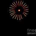 Flower Fireworks by Robert Bales