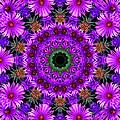Flower Power by Kristie  Bonnewell