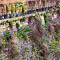Flower Wall Along The Arno River- Florence Italy by Jon Berghoff