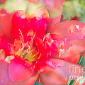 Flowers Bloom In Multiples by Sonja Quintero