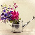 Flowers In Watering Can by Edward Fielding