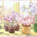 Flowers On The Windowsill by Julia Rowntree