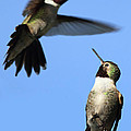 Fluttering by Shane Bechler