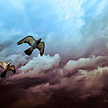 Flying Before The Storm by Bob Orsillo