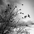 Flying Birds by Elena Elisseeva