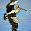 Flying Pelican 4 by Heng Tan