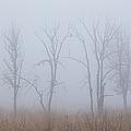 Fog by Angie Vogel