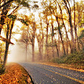 Foggy Fall Wonderland - Blue Ridge Parkway I by Dan Carmichael
