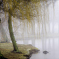 Foggy Lake Morning by Vicki Jauron