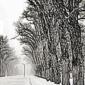 Foggy Morning Landscape - Fractalius 7 Print by Steve Ohlsen