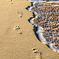 Footprints On Beach by Elena Elisseeva