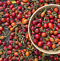 Foraged Rose Hips by Tim Gainey