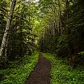 Forest Beckons by Mike Reid