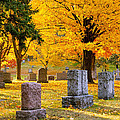Autumn At Forest Hill by Mary Amerman