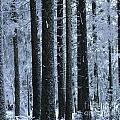 Forest In Winter by Bernard Jaubert