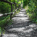 Forest Path by Dobromir Dobrinov