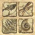 Fossils by JQ Licensing