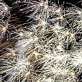 Fourth of July Fireworks Print by Kim Bemis
