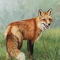 Fox  by David Stribbling