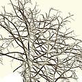 Fractal Ghost Tree - Inverted by Steve Ohlsen