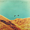 Freedom Vintage by Angela Doelling AD DESIGN Photo and PhotoArt