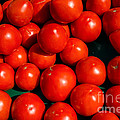 Fresh Ripe Red Tomatoes Print by Edward Fielding
