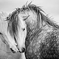 Friends II by Tim Booth