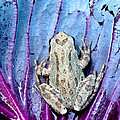 Frog On Cabbage by Jean Noren