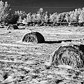 frozen snow covered hay bales in a field Forget Saskatchewan Canada by Joe Fox