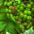 Fruit Bearing by Heidi Smith
