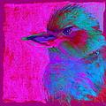 Funky Kookaburra Aus...