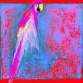Funky Rainbow Parrot...