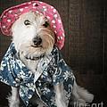 Funny Doggie by Edward Fielding