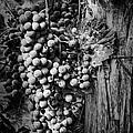 Future Wine by Jeff Swanson