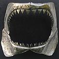 Gaint Shark Jaw Sculpture by Stuart Peterman