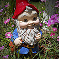 Garden Gnome by Judy Hall-Folde