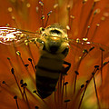 Gathering Nectar by Camille Lopez